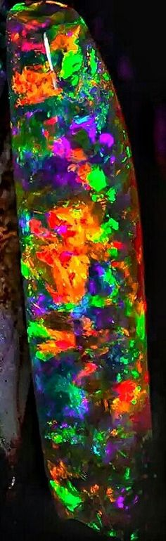 The World's Most Famous Belemnite is The Virgin Rainbow A 72 carat Black Crystal Opal belemnite fossil found in This opal is on display at Adelaide Museum celebrating 100 years of opal mining in the state. The exhibition is called simply OPALS