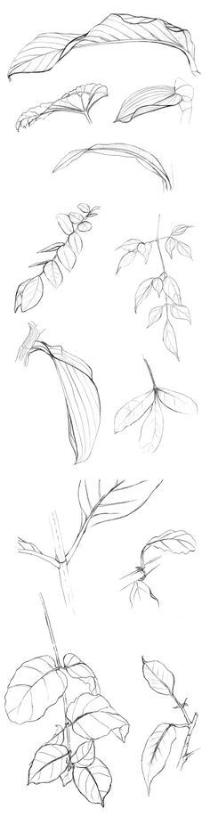 Flower Art Drawing, Leaf Drawing, Flower Sketches, Nature Drawing, Art Sketches, Botanical Drawings, Botanical Illustration, Pencil Drawings, Contour Drawings
