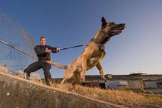 How to Evade and Escape Tracking Dogs