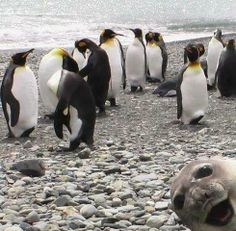 Haha this seal is priceless