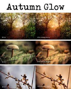 Autumn Glow  Lightroom Presets by PresetsGalore on Etsy, $2.75