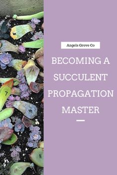 succulent garden care Most Common Succulent Propagation Mistakes - Angels Grove
