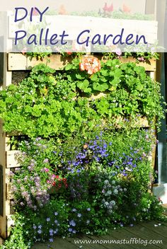 Love this idea to create green space in a court yard - would look great with lettuce and herbs or bright perennials. Would need to hinge it to the wall for safety. DIY Pallet Garden-- Make a Green Wall using only a pallet and Landscape Fabric Herb Garden Pallet, Pallets Garden, Pallet Gardening, Old Pallets, Recycled Pallets, Wooden Pallets, Outdoor Projects, Garden Projects, Pallet Projects