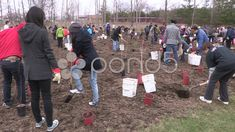 Stock video footage Thousands of student and adults take part in tree plantings every spring in Ontario Canada to help the environment and slow down climate change and global warming. Help The Environment, Trees To Plant, Company Brochure, Social Media Graphics, Global Warming, Climate Change, Planting, Stock Footage, Spring