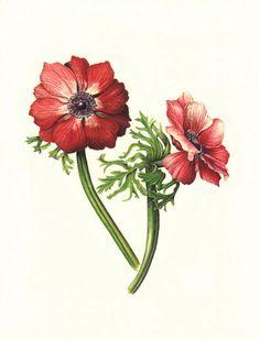 Anemone by Olivia Marie Braida-Chiusano.