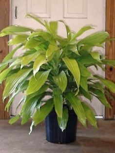Plants for Office and Home. The office plants and floweries delivered by Toronto Bulk Flowers. We choose the low maintenance plants.