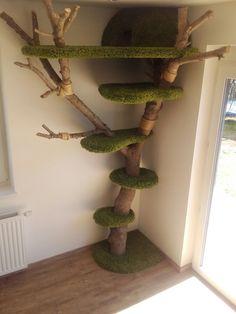 Pallet, Home Decor, Cats, Shed Base, Decoration Home, Room Decor, Palette, Pallets, Wooden Pallets