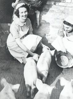 Nurses looking after piglets in the grounds of a Convalescent Home.