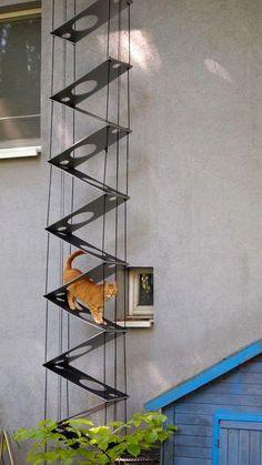 Katzenleiter Katzentreppe in Tierbedarf, Katzen, Kratzbäume & Möbel Cat Walkway, Cat Habitat, Cat Stairs, Cat Entertainment, Gatos Cat, Cat Hacks, Cat Shelves, Cat Playground, Lots Of Cats