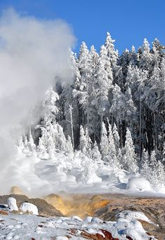 Yellowstone National Park in the winter - something to behold!!