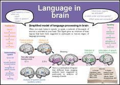 language in brain
