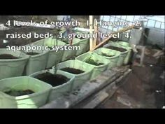 Aquaponic Garden *** Do aquaponics yourself and do it without spending much from Cornucopia Project