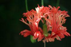 Love this flower!