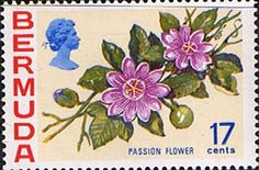 Bermuda 1970 Flowers SG 258a Passion Flower Fine Mint SG 258a Scott 322Other Flower Stamps Here