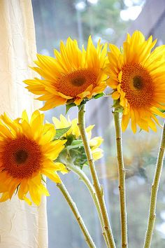 Sunny flowers on a gray day