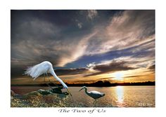 THE TWO OF US - (prints available) bird photography, wildlife pictures, pictures with birds, sky photos, cloud pictures, sunrise pictures, photos of sunsets, waterbirds