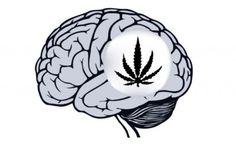 Il pesante utilizzo di Marijuana può danneggiare gravemente il cervello In questo periodo c'è una grande lotta tra chi è a favore della legalizzazione della marijuana per f