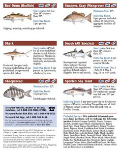 1000 images about be an ethical angler on pinterest for Tampa bay fishing guides