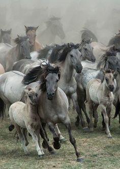 39Wild Horses Mustangs
