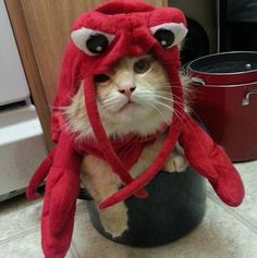 lobstercat