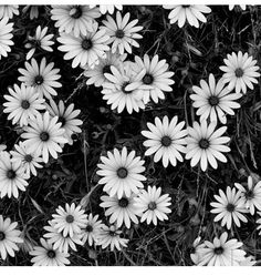 Pictures of black and white flowers google search pictures of similar ideas mightylinksfo