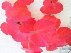 El #otoño es color #mLearning_INTEF
