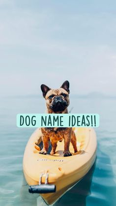 Dog name ideas!!