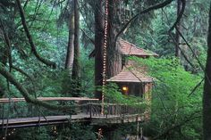 Longing to stay in a treehouse? You can! A short drive east of Seattle in Fall City is TreeHouse Point, with multiple treehouses that can be rented. This builder is currently featured building treehouses across the U.S. on Discovery Channel.