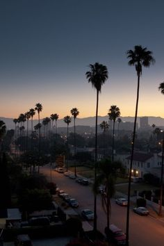 79 Los Angeles Backgrounds Wallpapers available. Share Los Angeles Backgrounds with your friends. Submit more Los Angeles Backgrounds Los Angeles Wallpaper, San Diego, Los Angeles Palm Trees, Usa Tumblr, Photos Voyages, City Of Angels, California Dreamin', California Palm Trees, Venice Beach