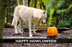 Halloween and Fall E-cards - Woodland Park Zoo Seattle WA