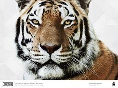Tigre, especie en peligro de extinción: 3 de Marzo, Día Mundial de la Naturaleza