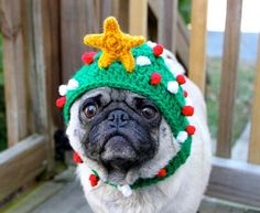 Pug in a Christmas hat. I have just made up for NSW inevitably losing Origin. You're welcome.