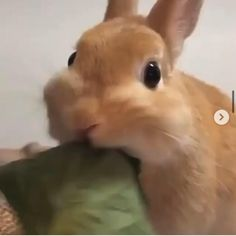 Satisfying Things, Oddly Satisfying Videos, Cute Baby Animals, Funny Animals, Dream Job, Asmr, Cute Babies, Bunny, Ideas