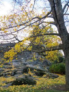 VMSomⒶ KOPPA: Keltainen kukkaympyrämekko