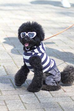 2223e424b5d4 Estilo urbano y moderno  gafas Fluffy Animals