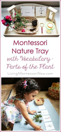 Montessori Nature Tray with Vocabulary – Parts of the Plant