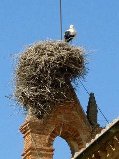 A Stork's nest - Carrilon de los Condes- Spain