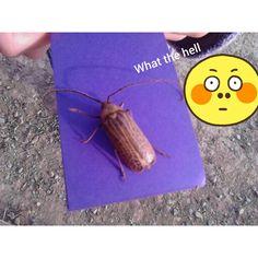 Humongous bug