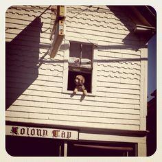 Dog on window. Provincetown, Massachusetts.