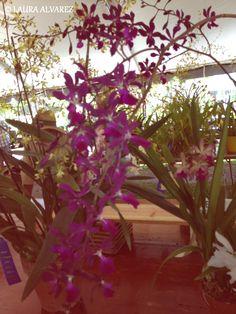 PURPLE ORCHIDS ;)