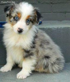 looks like my dog simba as a baby.. so adorable