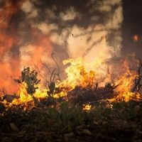 After four days of terrorizing Wine Country and surrounding regions, the Northern California wildfires on Thursday became the deadliest in state history, Asatru Folk Assembly, Trial By Ordeal, Presumption Of Innocence, California Wildfires, American Freedom, Wild Hunt, The Kingdom Of God, Extreme Weather, California Homes