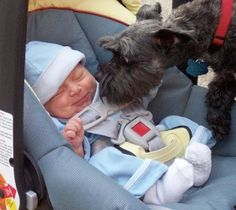 When Bowser Met Baby: Here are 14 important tips for successfully introducing your dog to your new bundle of joy.
