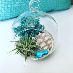 Sea Urchin Mini Air Plant Hanging Terrarium