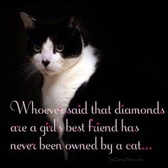 I would rather have a cat than a diamond