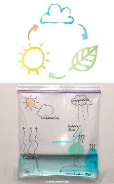 Try this water cycle in a bag science experiment and learn about the water cycle.