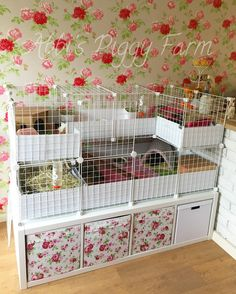 4x2 C&C cage with a C shaped loft. I've used Ikea Kallax units underneath for storage for hay, newspapers, puppy pads, spare fleece pads, pellets etc. #c&c #ikea #guineapigcage #candccage