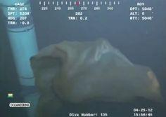 Strange underwater sea creature caught on camera in the Gulf of Mexico (video)