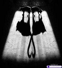 Kitty shadows.