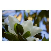 Stained Glass Sky Southern Magnolia Poster Print posters by Lee Hiller #Photography # Nature